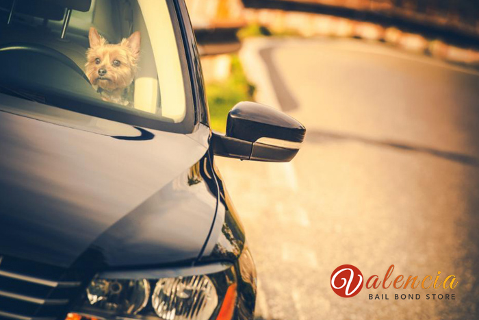 dont-leave-your-pet-behind-in-the-car