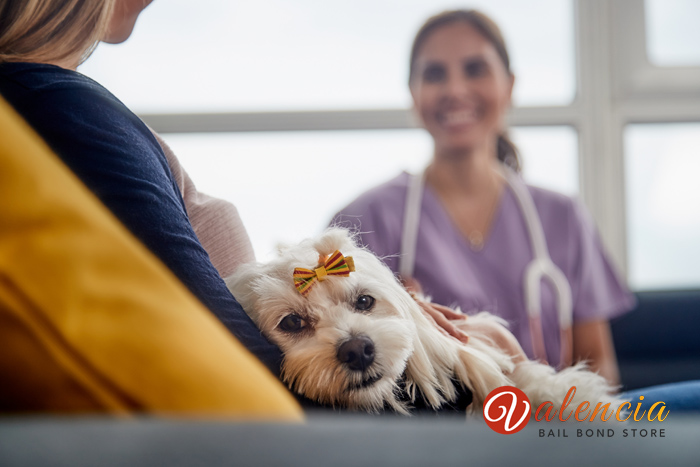 Laws Every California Pet Owner Should Know